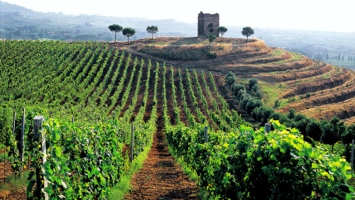 Roman Countryside Vineyards & Wine Tasting
