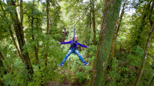 Native Forest Canopy Tour by Rotorua Canopy Tours