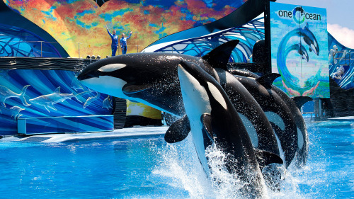 SeaWorld® San Diego Admission