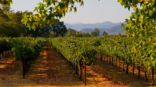 Small-Group VIP Temecula Wine Tour by Five Star San Diego