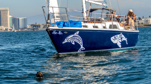 Half-Day Whale-Watching & Sailing Tour by San Diego Sailing Tours