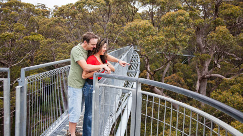 Valley of the Giants TreeTop Walk by Australian Pinnacle Tours