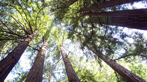 Muir Woods & Sausalito Sightseeing Bus Excursion by Tower Tours