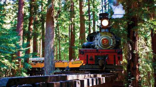Redwood Forest Steam Train Adventure by Roaring Camp Railroads