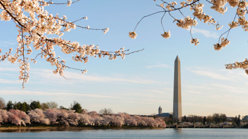 Tidal Basin Guided Walking Tour by Moonlight