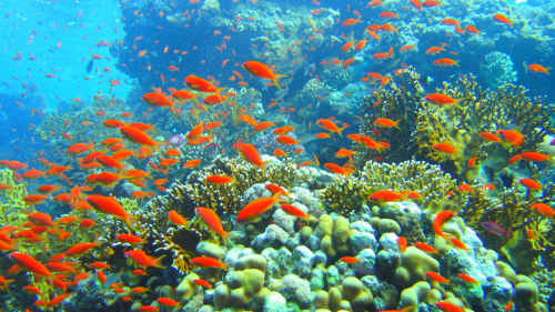 Glass-Bottom Boat Cruise & Coral Reef Viewing