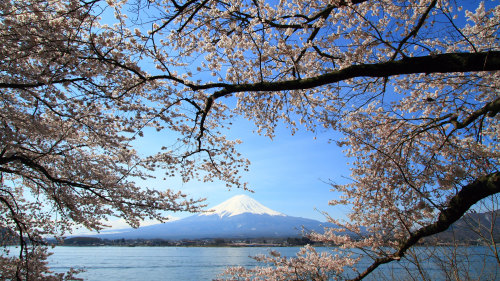 Mount Fuji Full-Day Tour with Cruise & Lunch by Japan Oriental