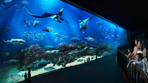 SEA Aquarium™ 1-Day Pass with Transfer by Tour East Singapore