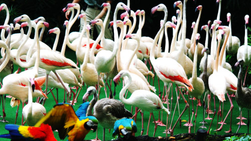 Jurong Bird Park Admission with Transfer