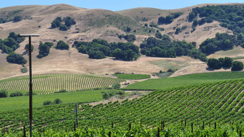 Wine Tour in Sonoma Valley by Green Dream Tours