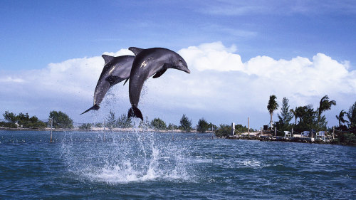 Dolphin & Whale Watching Cruise
