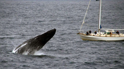 Eco Whale Watching Sailing Small Group Cruise
