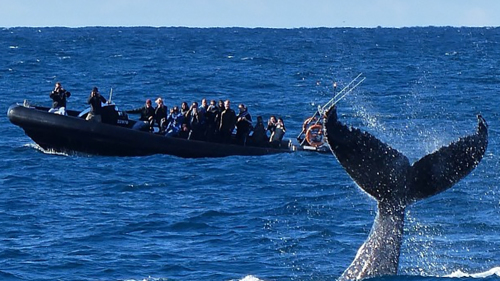 Whale-Watching Tour & Speed Boat Ride by Ocean Extreme