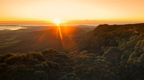 Sunrise Rainforest Tour by Illawarra Fly Treetop Adventures