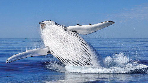 Whale Watching Cruise by Fantasea Adventure Cruising