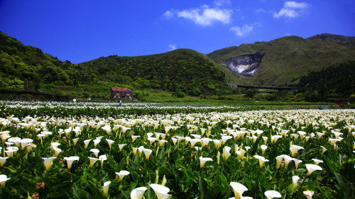 Yangmingshan National Park & Hot Springs Tour by Edison Travel