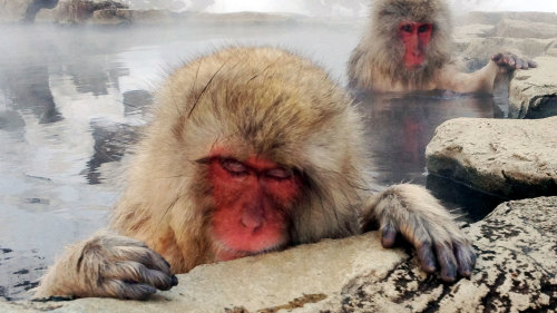 Private 3-Day Snow Monkeys Tour by Bashukways Travel