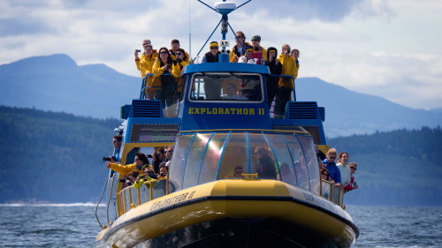 Vancouver Whale Watch: Whale-Watching Tour