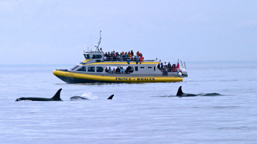 Whale Watching & Wildlife Cruiser Tour