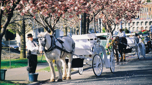 Horse-Drawn Carriage Ride in Beacon Hill Park