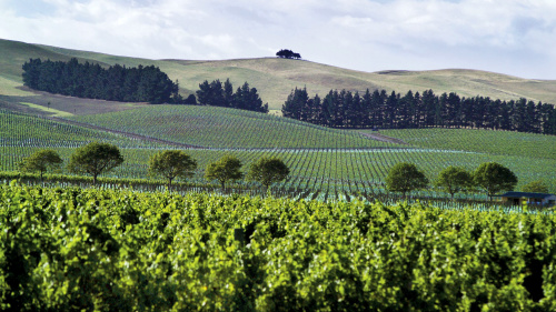 Waipara Valley Wine Half-Day Tour