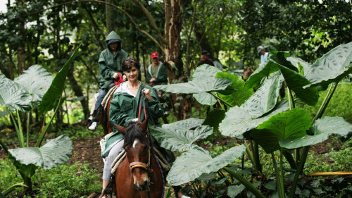 Rainforest & Valleys on Horseback