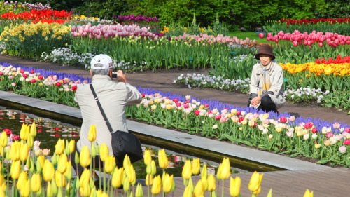 Skip-the-Line Guided Tour: Keukenhof Gardens & Tulip Farm