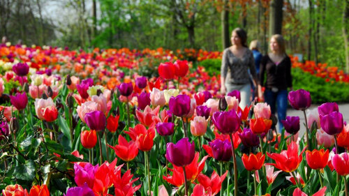 Guided Keukenhof Gardens & Haarlem Tour with Picnic Lunch