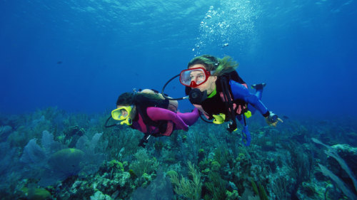 Scuba Diving Lesson & Guided Open-Water Dive