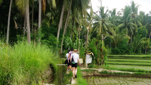 Private Bali Herbal Walk & Jamu Making by EXO Travel