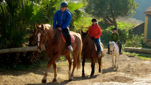 Horseback Riding Experience in Collserola Park by Living It