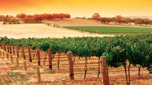 Grand Barossa Valley Day Tour
