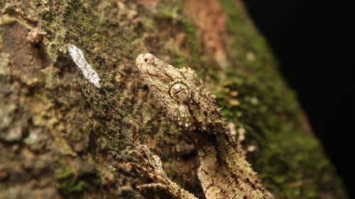 Glow Worms Walk & Nocturnal Rainforest 4WD Tour