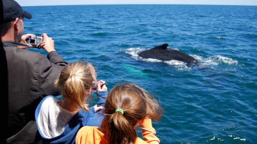 3-Hour Whale-Watching Cruise & New England Aquarium