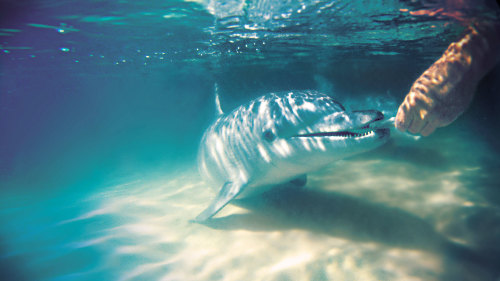 Tangalooma Dolphin Adventure Tour with Whale Watching
