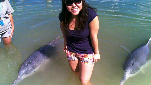 Half-Day Indo-Pacific Dolphin Feeding Tour
