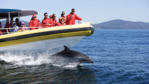 Bruny Island Tour & Wilderness Cruise