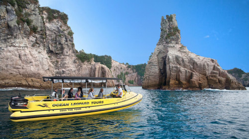 Full Monty Cathedral Cove Cruise by Ocean Leopard