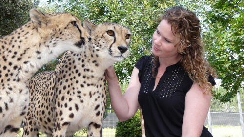 Meet a Cheetah Encounter at the National Zoo & Aquarium