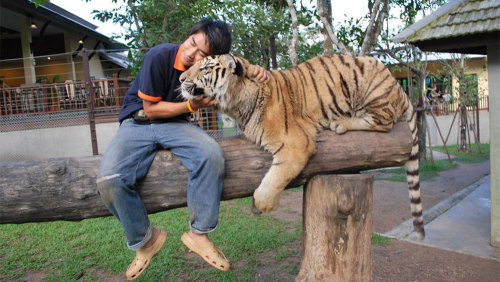 Tiger Kingdom & Padong Long-Necked Hill-Tribe Village Half-Day Tour by Tour East Thailand