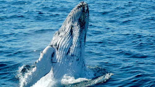 Whale Watching Cruise by Whale Watch Experience
