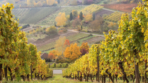 Rhine Valley Full-Day Tour with Wine Tasting & Lunch