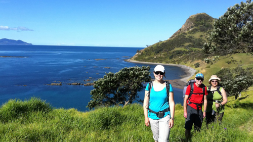 Coromandel Coastal Walkway Day Tour by Coromandel Adventures