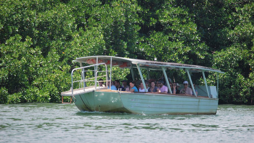 Daintree Rainforest Tour by BTS Tours