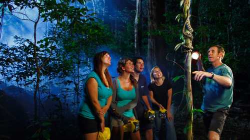 Jungle Adventure Night Walk by Jungle Surfing Canopy Tours