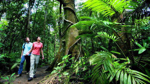 Cape Tribulation Tour by Tropics Explorer