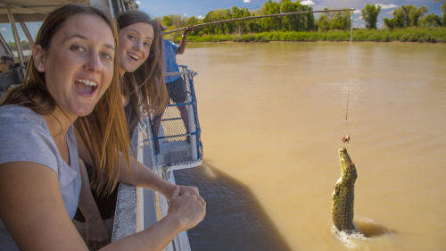 Jumping Crocodile Afternoon Cruise & Tour by AAT Kings