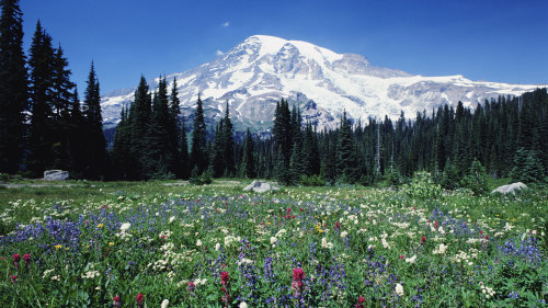 Mt Rainier Tour