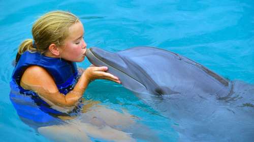 Kids-Only Shallow Water Dolphin Experience