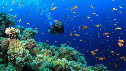 Wasini Island Snorkel & Scuba Full-Day Tour with Lunch